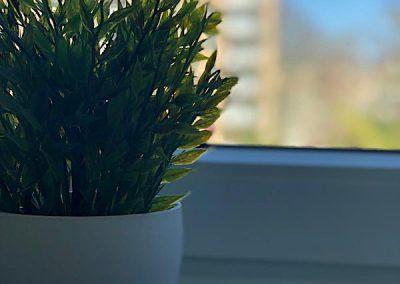 DIM Hintergrund Bild Pflanze am Fenster mit Blurreffekte